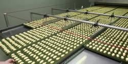 Métiers des industries agroalimentaires